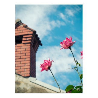 Chimney and wild roses postcard