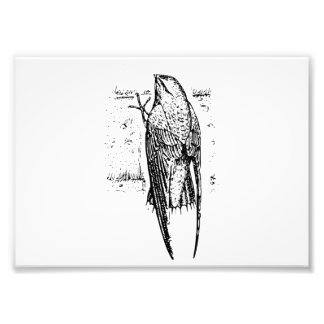 Chimney Swift Bird Art Photo