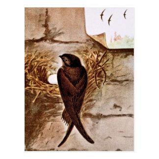 Chimney Swift Postcard