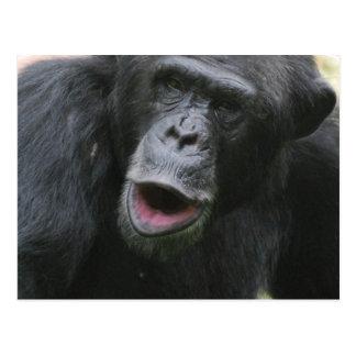 Chimp Chat  Postcard