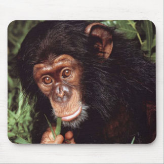 Chimpansee Mouse Pad