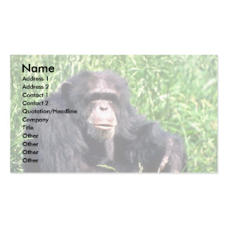 Chimpanzee adult sitting in sunny grass Double-Sided standard business cards (Pack of 100)