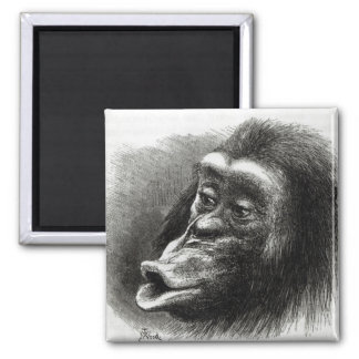 Chimpanzee Disappointed and Sulky Square Magnet