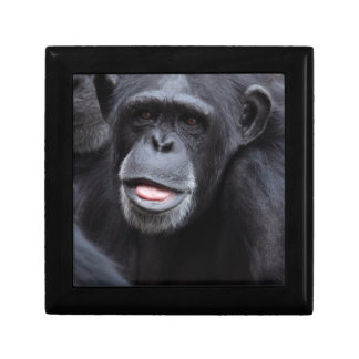 Chimpanzee Gift Box