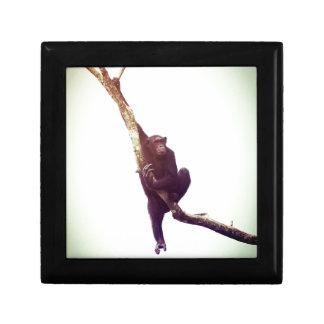 Chimpanzee in Tree Small Square Gift Box