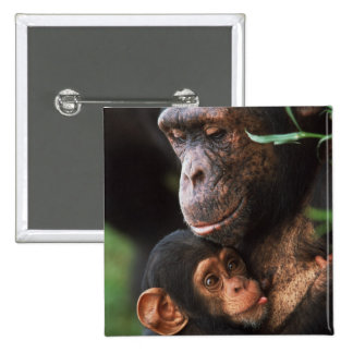 Chimpanzee Mother Nurturing Baby 15 Cm Square Badge
