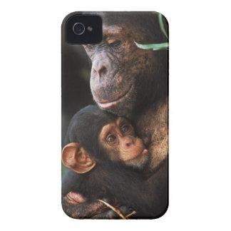 Chimpanzee Mother Nurturing Baby Case-Mate iPhone 4 Cases