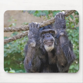 Chimpanzee on rope mouse pad