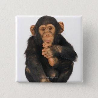 Chimpanzee (Pan troglodytes) 15 Cm Square Badge