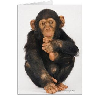 Chimpanzee (Pan troglodytes) Card