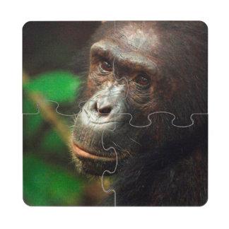 Chimpanzee (Pan troglodytes) Portrait in Forest Puzzle Coaster