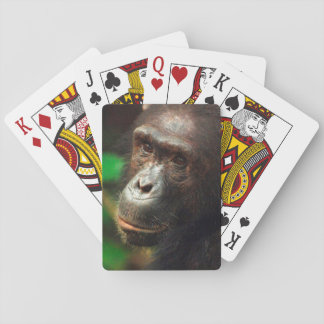 Chimpanzee (Pan troglodytes) Portrait in Forest Playing Cards
