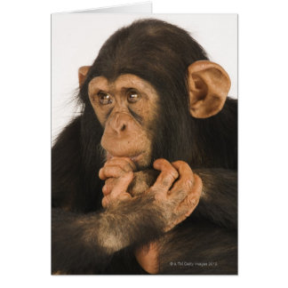 Chimpanzee (Pan troglodytes). Young playfull 2 Greeting Card