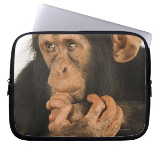 Chimpanzee (Pan troglodytes). Young playfull 2 Laptop Sleeve