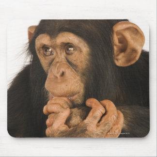 Chimpanzee (Pan troglodytes). Young playfull 2 Mouse Mat