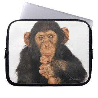 Chimpanzee (Pan troglodytes). Young playfull Laptop Sleeve