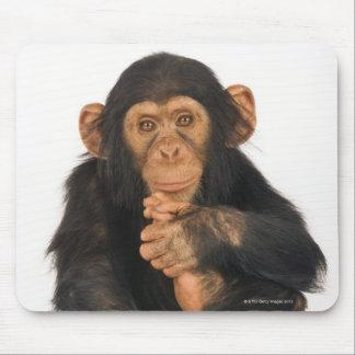 Chimpanzee (Pan troglodytes). Young playfull Mouse Mat