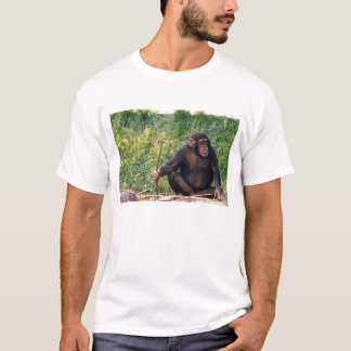 Chimpanzee using stick as a tool to obtain T-Shirt