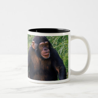 Chimpanzee using stick as a tool to obtain Two-Tone coffee mug