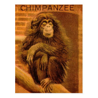 Chimpanzee Vintage Magic Lantern Slide 1890s Postcard