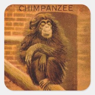 Chimpanzee Vintage Magic Lantern Slide 1890s Square Sticker