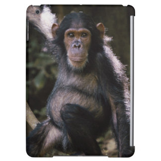 Chimpanzee Young Female Cover For iPad Air