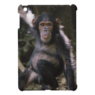 Chimpanzee Young Female Cover For The iPad Mini