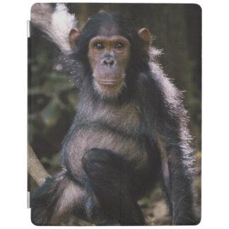 Chimpanzee Young Female iPad Cover