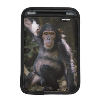 Chimpanzee Young Female iPad Mini Sleeves