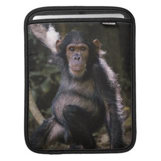 Chimpanzee Young Female iPad Sleeve