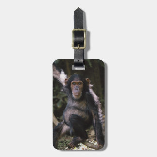 Chimpanzee Young Female Luggage Tag