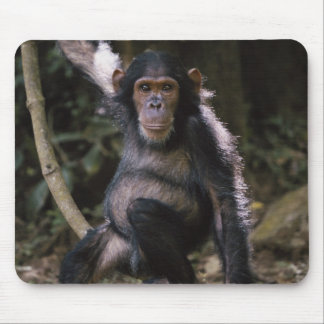 Chimpanzee Young Female Mouse Mat