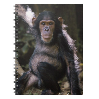 Chimpanzee Young Female Spiral Notebook
