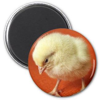 Chin up Chick! 6 Cm Round Magnet