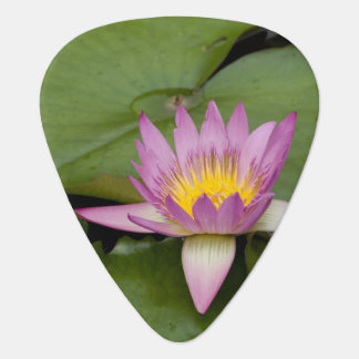 China, Hong Kong, New Territories. Chi Lin Plectrum