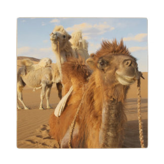 China, Inner Mongolia, Badain Jaran Desert 2 Wood Coaster