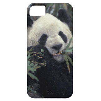 China, Wolong Nature Reserve. Giant Panda feeds Case For The iPhone 5