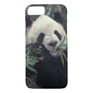 China, Wolong Nature Reserve. Giant Panda feeds iPhone 8/7 Case