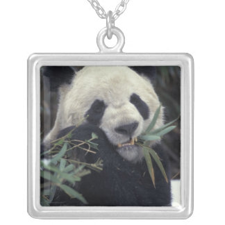 China, Wolong Nature Reserve. Giant Panda feeds Silver Plated Necklace