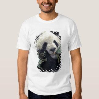 China, Wolong Nature Reserve. Giant Panda feeds T Shirt