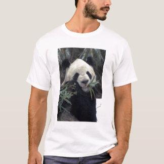 China, Wolong Nature Reserve. Giant Panda feeds T-Shirt