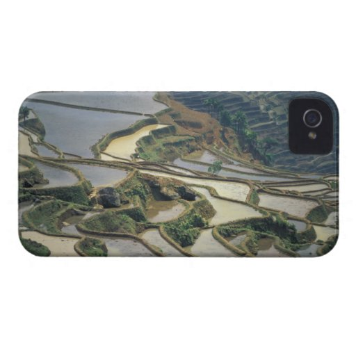 China, Yunnan Province. Flooded rice terraces of Blackberry Bold Covers