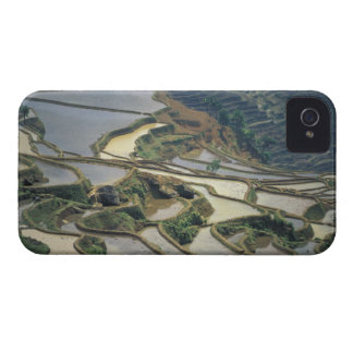 China, Yunnan Province. Flooded rice terraces of iPhone 4 Cover