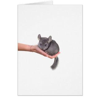 chinchilla carte de vœux