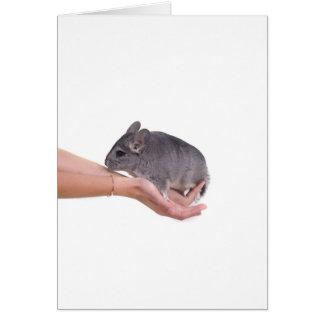 chinchilla greeting cards