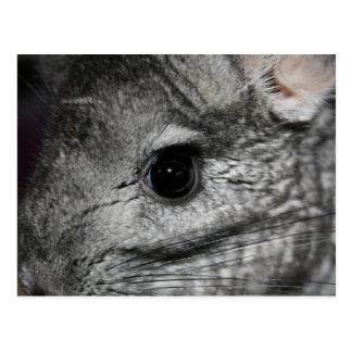 chinchilla eye close up postcard
