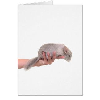 chinchilla greeting card