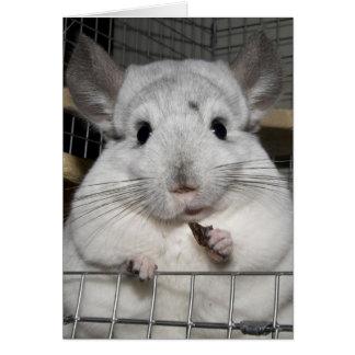 Chinchilla nibbling a raisin! greeting card