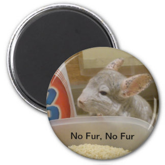 Chinchilla Peekaboo pledge you no fur magnet