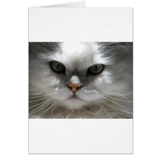 Chinchilla Persian Cat Card